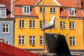 Seagull on historic ship in front of colorful house in Nyhavn in Copenhagen Denmark poster