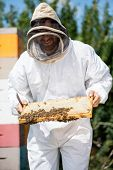 Male beekeeper in protective clothing inspecting honeycomb frame at apiary poster