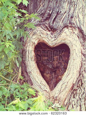 a tree with a knothole shaped like a heart done with a soft filter