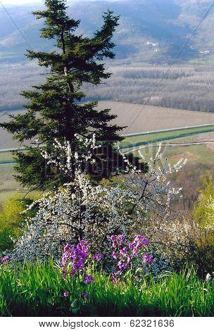 Countryside Flower Arrangement