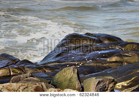 Seabirds feeding on the rocks
