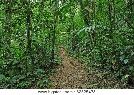 Tropical Jungle in Costa Rica