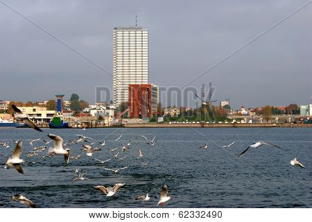 Weather on a Klaipeda port - autumn waves wind and flying seagulls. Lithuania. poster