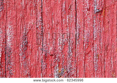 Bright Red Board Wall With Small Mold Growing