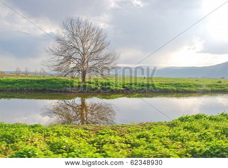 Bare Lone Tree Reflecting In A Stream With Omnious Sky   Taken In The Hulla Lake Nature Reserve, Gal