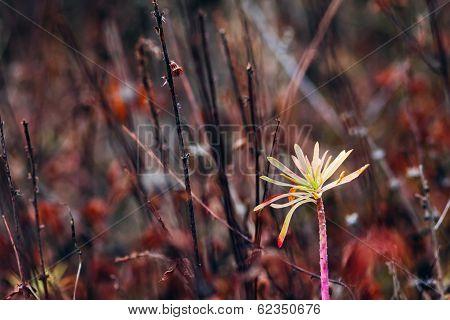 Wild flower in the night well meadow
