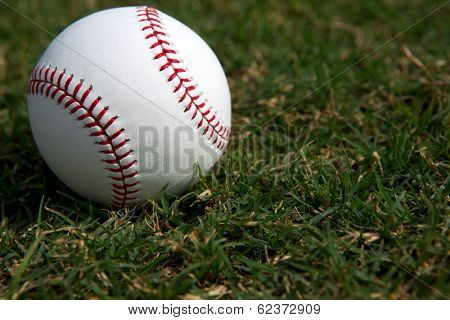 New Baseball on the Outfield Grass