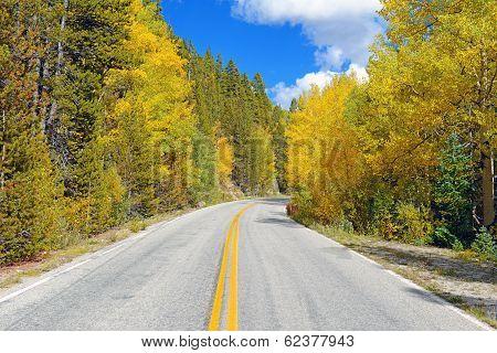 Autumn Foliage: Aspen Trees in Fall Colors