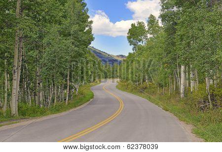 Driving through Aspen Forest