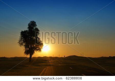 Lonely desert tree in sunrise, Dubai, UAE