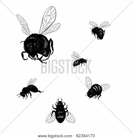 Vector Collection Of Various Positioned Doodle Bees