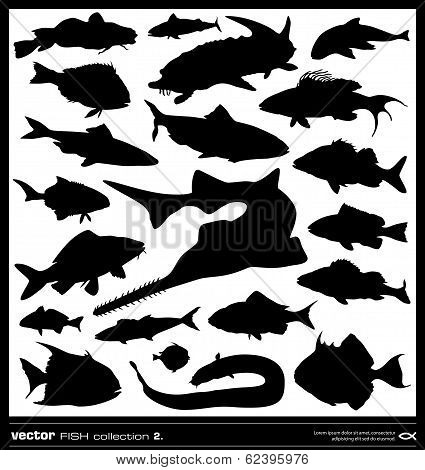 Set Of Fish Silhouette. Vector.