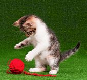 Cute baby kitten playing red clew of thread on artificial green grass poster