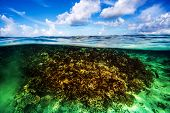 Beautiful coral garden underwater, diving on Maldives, blue cloudy sky, turquoise water, luxury summer vacation, beauty of wild nature poster