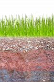 Cross section of green grass and underground soil layers beneath poster