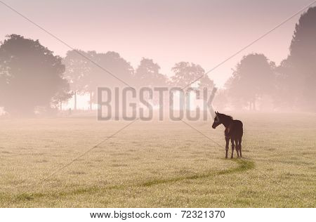foal silhouette on pasture in fog at sunrise poster