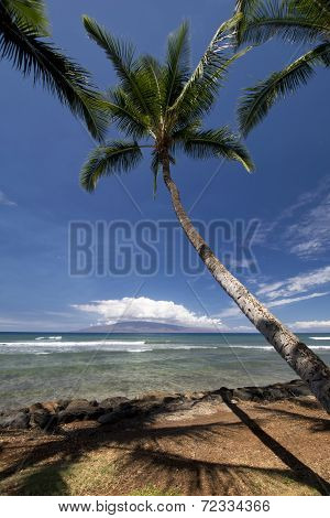 Palm trees at Launiupoko Beach Park, near Lahaina, Maui, Hawaii