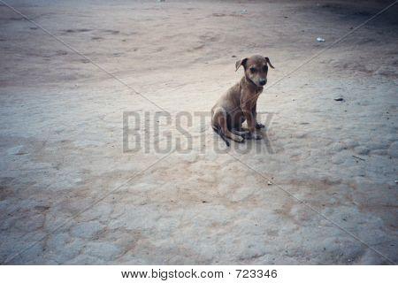 Lone Poor Forlorn Dog