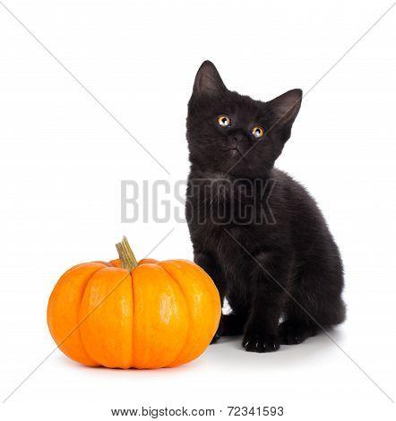 Cute black kitten next to a mini pumpkin isolated on white