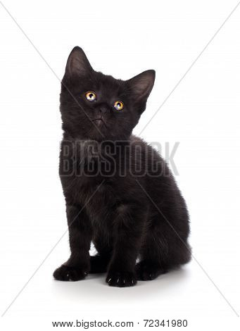 Cute black kitten isolated on a white background