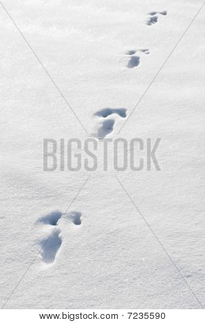 Rabbit Track
