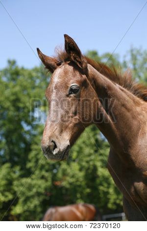 Side-view portrait of cute foal on a summer pasture