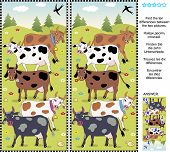 Farm themed picture puzzle: Find the seven differences between the two pictures of spotted milk cows. Answer included. poster