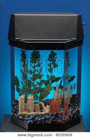 empty fish tank