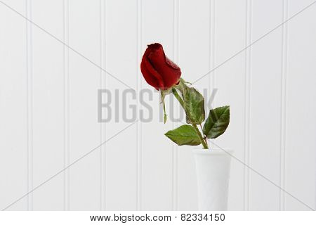 Closeup of a red rose bur with water droplets in a white vase against a white beadboard background. Horizontal format with copy space.