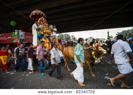 KUALA LUMPUR, MALAYSIA - FEBRUARY 3, 2015: A pair of bulls pull a chariot carrying a Hindu god take part in a procession to the Batu Caves temple on Thaipusam day, a day of thanksgiving and devotion.