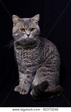 Cat in black