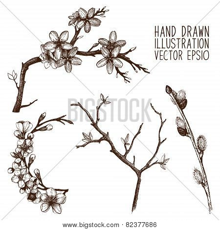 Cherry tree twig sketch set