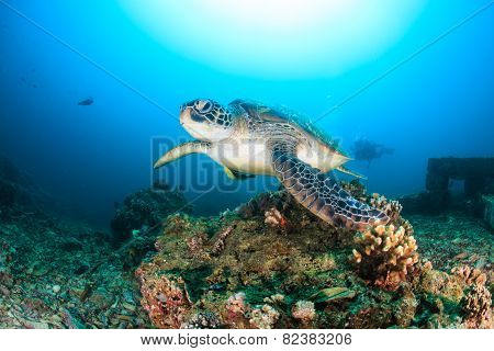 Green Turtle Swimming On A Reef