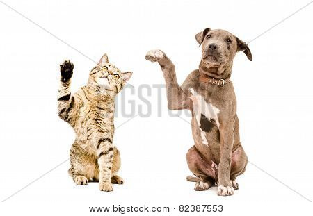 Cat  and  puppy sitting together with raised paws