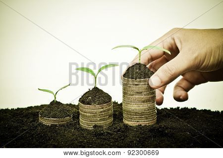 Hand holding stack of golden coins with young green trees / Business with csr practice and environmental concern