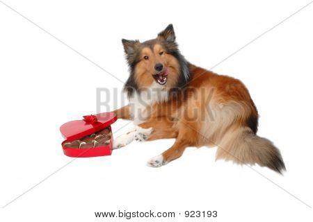Happy Valentine Day Dog