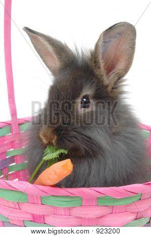 Easter Lion Rabbit 2