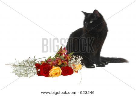 Romantic Cat 4