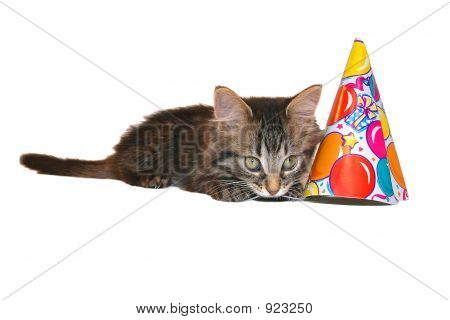 Cute Birthday Kitten