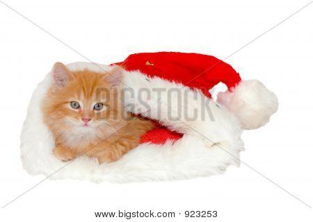 Christmas Red Kitten 2