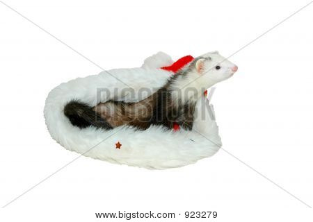 ferret in christmas bonnet close-up in white background poster