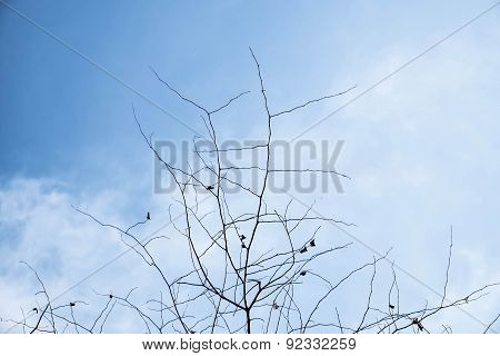 branches on blue sky