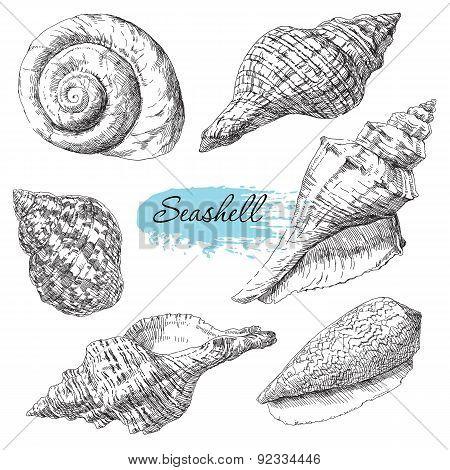 Set of various sea shells