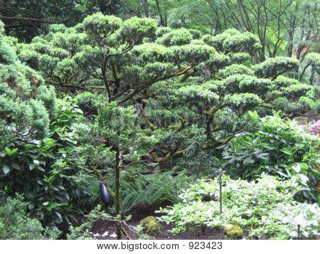 Japanese Garden Green Trees