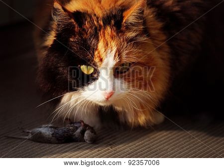 Cat And Mouse. Cat Killed The Mouse And Going To Eat.