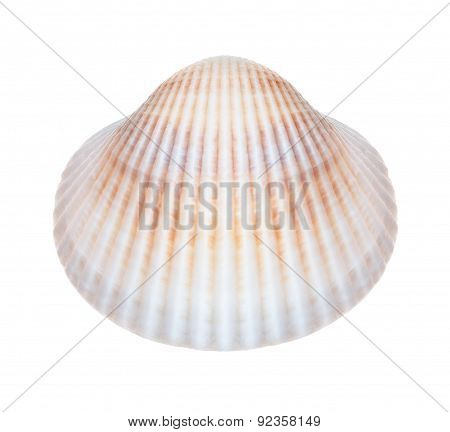 Shell On A White Background. House Of Molluscs