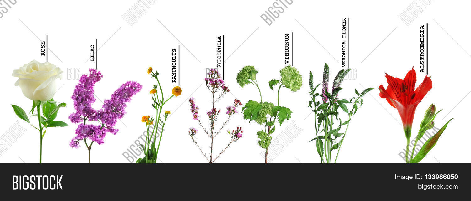 Beautiful various image photo free trial bigstock beautiful various flowers with names isolated on white background izmirmasajfo
