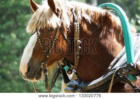 harnessed a horse, put on the clamp and ready to go