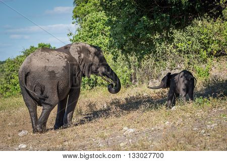 Mother And Baby Elephant Standing Beneath Tree