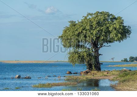 Tree And Birds On Riverbank In Sunshine